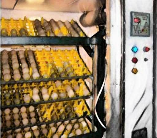 egg incubator - medical incubator - hens incubator-laboratory hub- poultry incubator - farm incubator