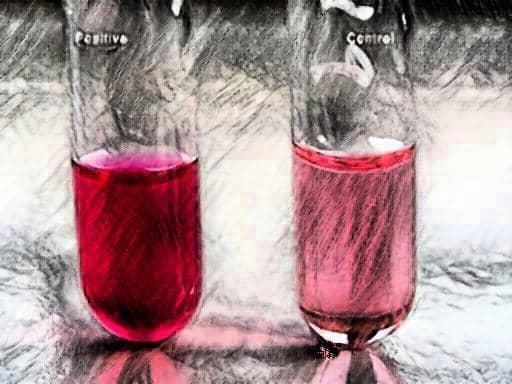 inulin fermentation - streptococcus pneumoniae inulin fermentation - inulin fermentation positive