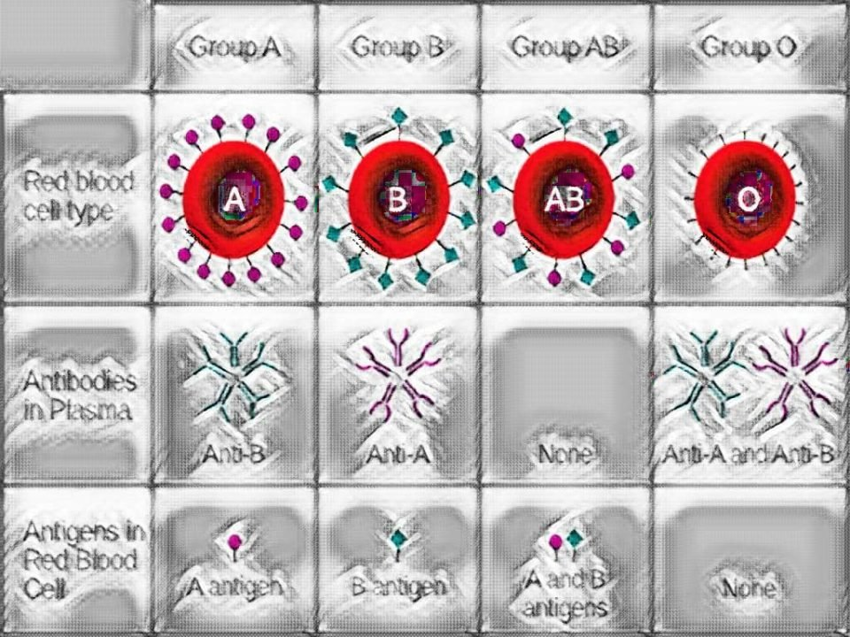 ABO - ABO BLOOD GROUP - LABORATORY HUB - A QUIZ ON ABO BLOOD GROUP